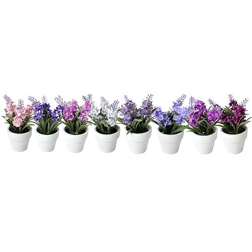Levandule sukulent, Mix MagicHome, 15-20 cm, kvetináč - papier, sellbox, 8ks